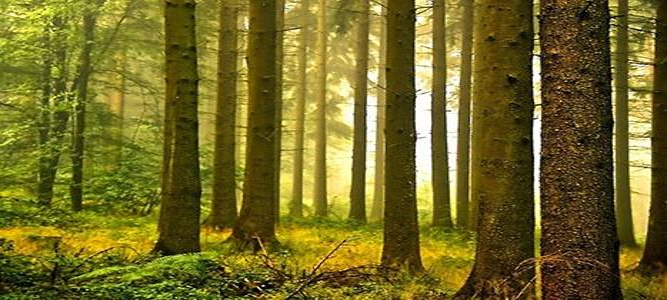 В эфире программа «Азбука леса»