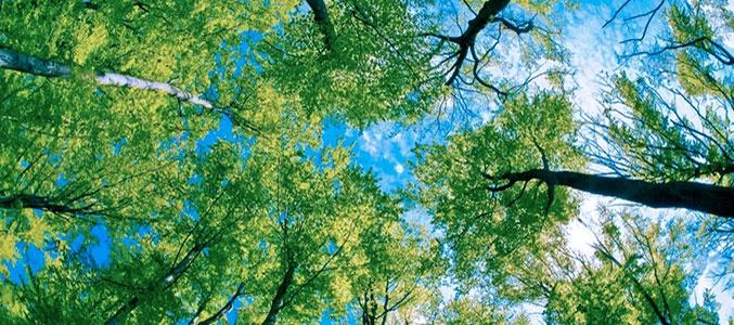 Поговорим о лесных жителях