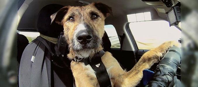 В Китае собака угнала грузовик