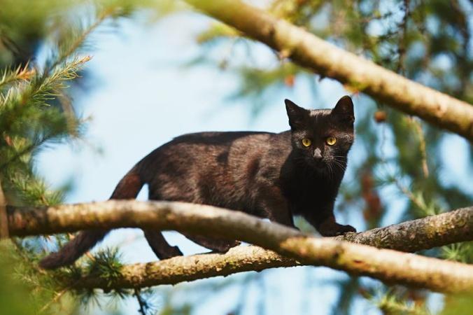 Кто снимает с деревьев кошек?