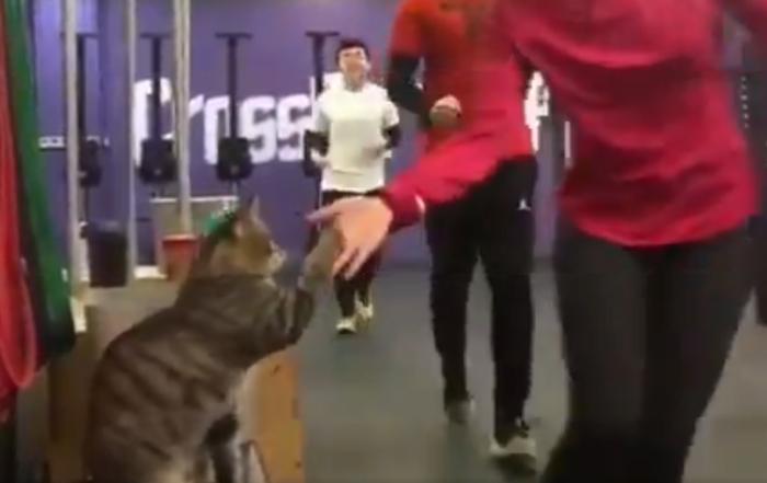 """Любишь спорт? Давай лапу! В Китае нашли котика, который даёт """"пять"""" всем спортсменам"""