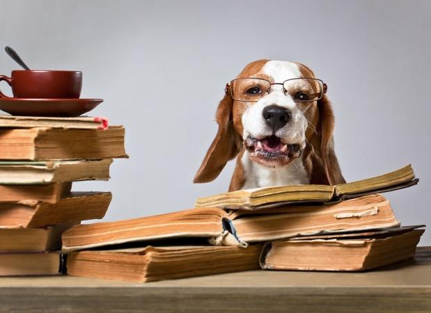 Собака-читака. В Московском дворце пионеров открыли сеансы чтения книг с собакой