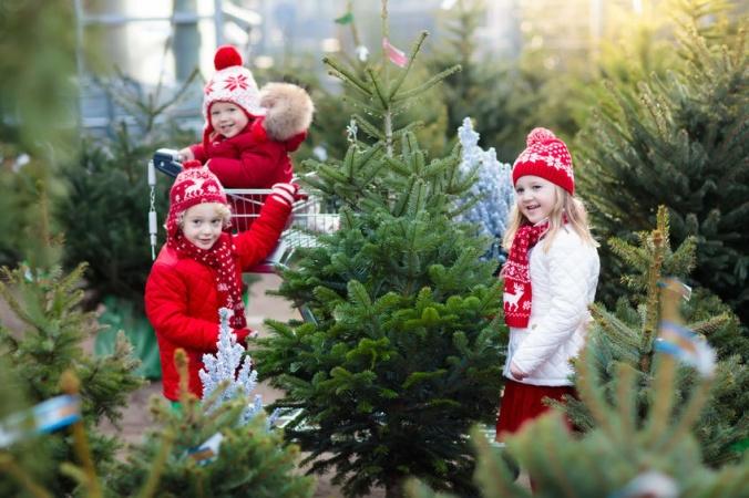 Дед Мороз посоветовал россиянам ставить дома ёлки в горшках