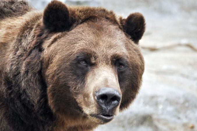 Медведь устроил берлогу прямо посреди города под Челябинском