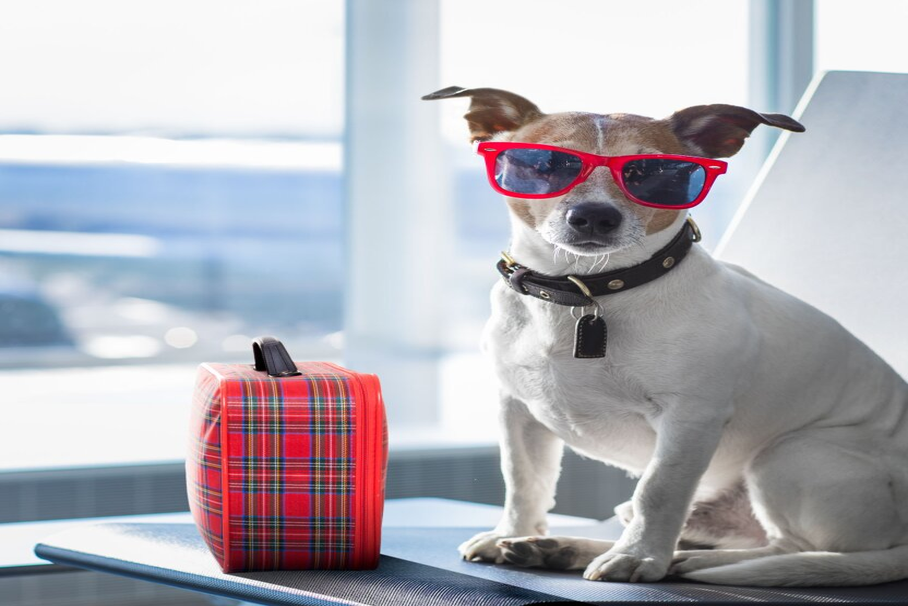 В аэропорту Домодедово специально обученные собаки помогут пассажирам справиться с тревогой