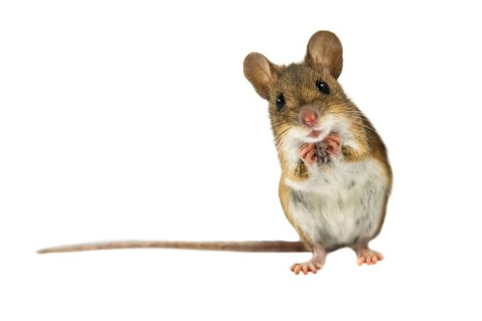 Мышь навела порядок в гараже у британского фермера