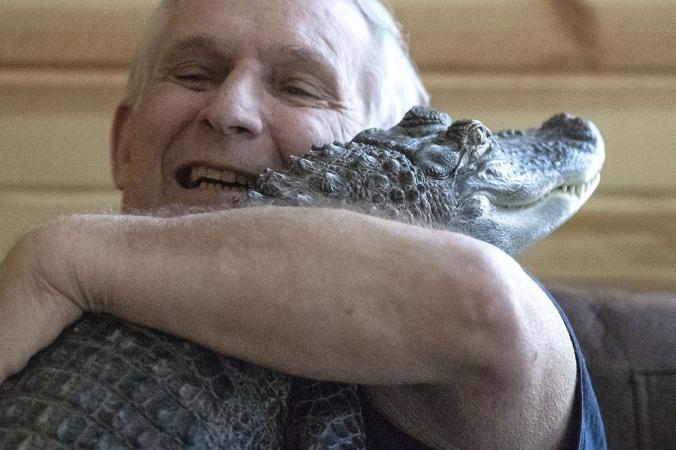 Дедушка завёл друга, чтобы побороть депрессию. И всё бы ничего, если бы друг не был аллигатором