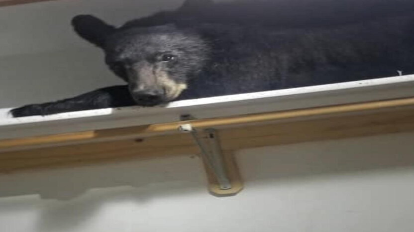 В США медвежонок пробрался в дом, запер дверь изнутри и как следует выспался
