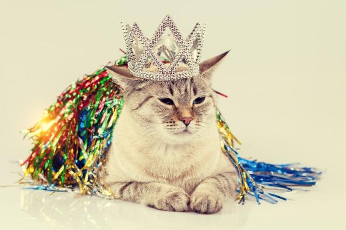 8 августа - Международный день котиков