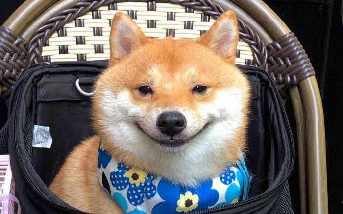 Собака-улыбака существует на самом деле