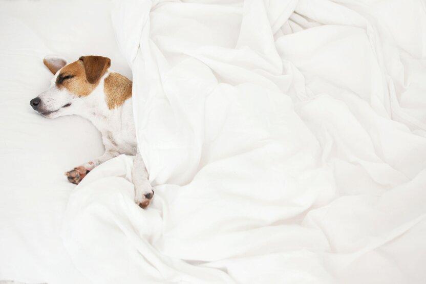 Как спят животные: необычные факты
