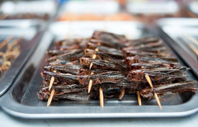Что будете заказывать: пюрешку из саранчи или вкусняшку с кузнечиками