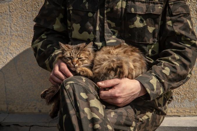 Котенок из Турции научился маршировать