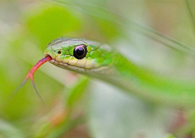 Почему змеи не моргают