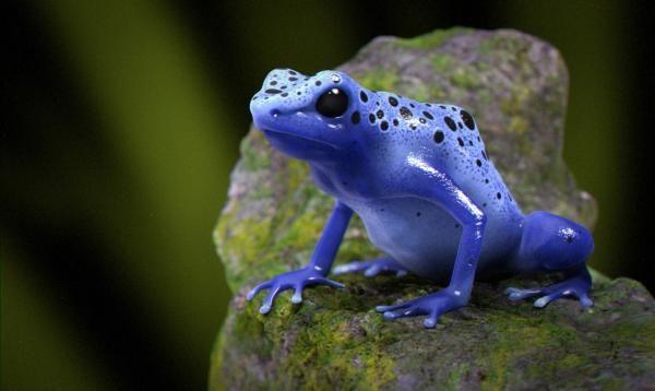 10 самых ядовитых в мире животных